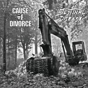 Cause Of Divorce: Cause Of Divorce / Intestinal Disease - Cover